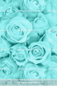 Футер 2-нитка Ментоловые розы
